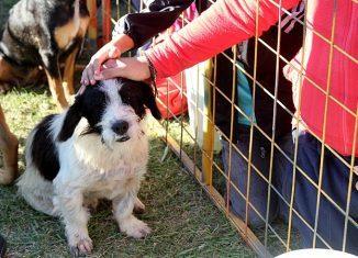 dia mundial del animal campaña adopcion