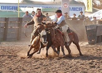 rodeo caballos en accion