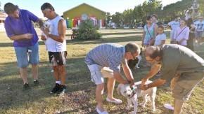 Vacunaciónantirrábicagratuita para perros y gatosenbarrioCarlos Casado