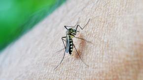 Un caso de dengue en Bombal