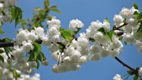 Primavera en Firmat