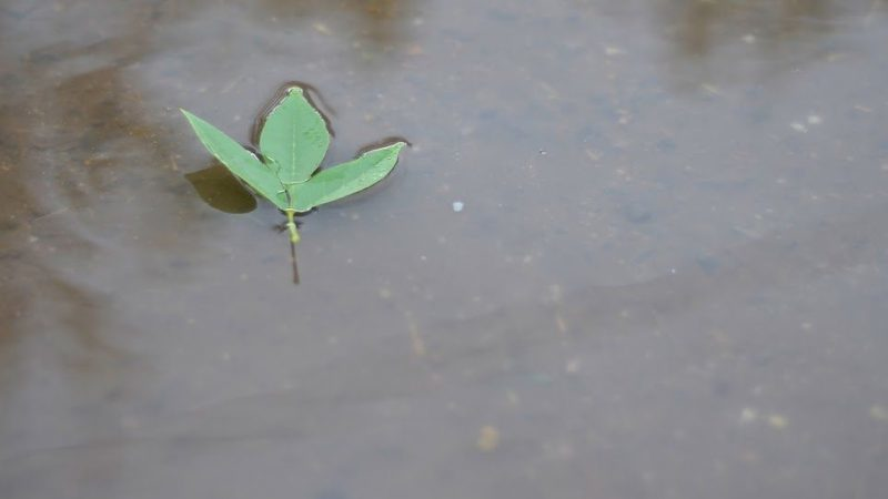 Pronóstico: ¿Vuelve la lluvia?