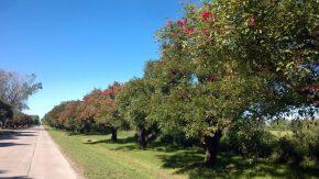 ¿Sabías que está vigente una ley que prohíbe la poda y extracción de árboles?