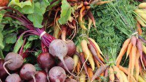Jornada de Intercambio de Experiencias Agroecológicas del Sur Provincial