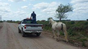 Secuestraron dos caballos que se encontraban sueltos en la vía pública