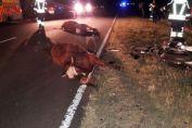 Dos jóvenes motociclistas colisionaron contra dos vacas sueltas en la RP 94