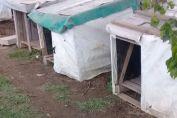 La Municipalidad denunció a dos personas por abandonar un perro muerto en la entrada del Refugio