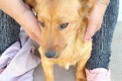 Noviembre: Castraciones semanales gratuitas para perros y gatos