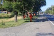 Vialidad Nacional inició el contrato de corte de pasto en la RN 33