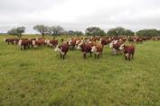 La provincia exportó un 44% del total nacional de carne bovina
